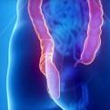 Hunterdon Gastroenterology