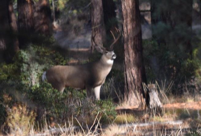 dsc_05351-last-day-buck