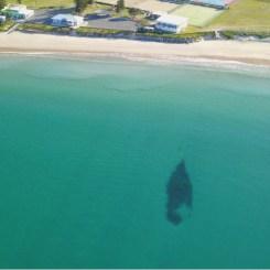 Berbice Shipwreck, just off Surf Club, Stockton Beach, NSW Australia (2021)