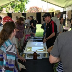 Artefacts retrieved from original 1918 time capsule at Capturing Time Event in Lambton 20 October 2018 (Photo: G Di Gravio)