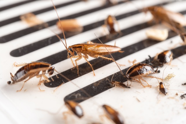 Roach Control Treatment