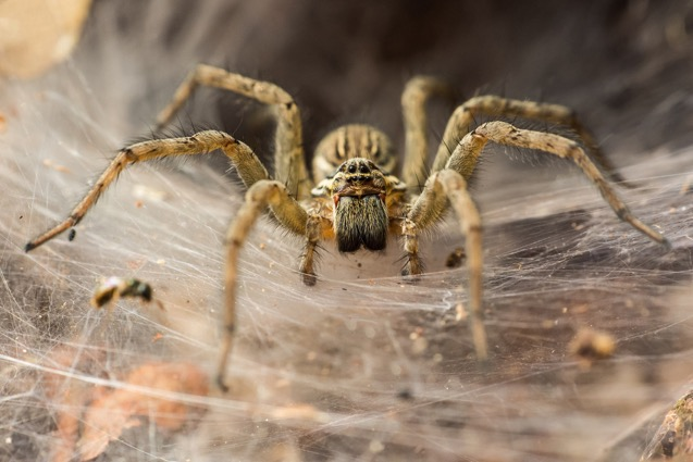 Spider Control - Contact Hunter Pest Control Today