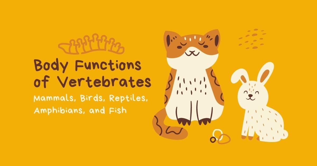 Hunters Woods PH   Montessori   Body Functions of Vertebrates