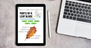 HuntersWoodsPH   Montessori Worksheets   Biology   Parts of a leaf blade