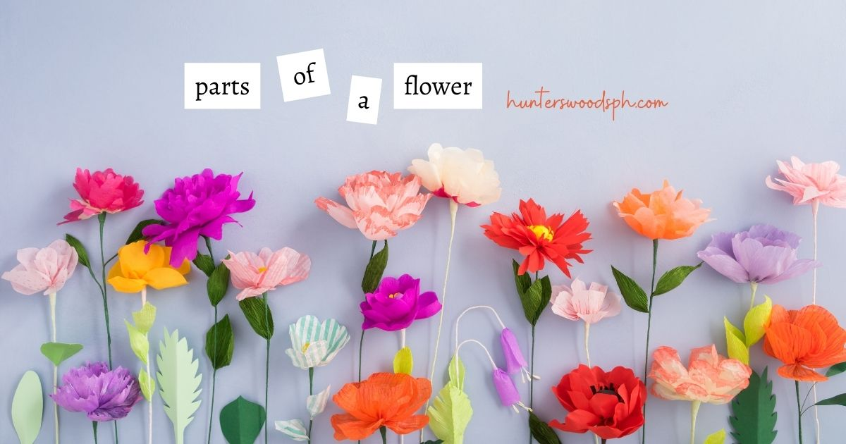 HuntersWoodsPH | Montessori Botany | Parts of a Flower | Stamen and Pistil