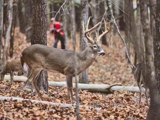 How To Stalk Deer