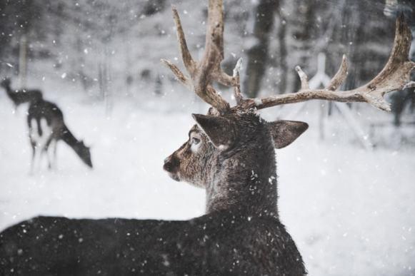 deer hunting tips