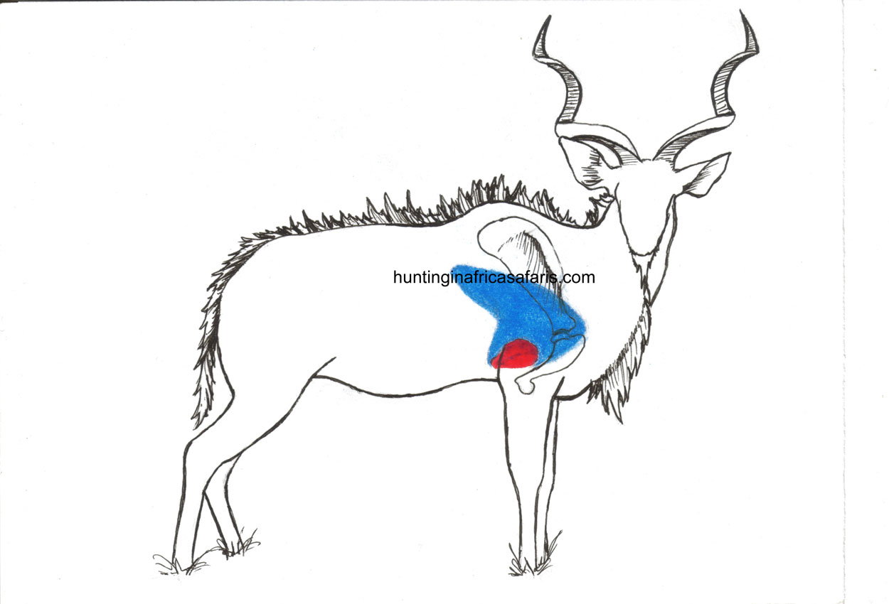 Bow Hunting Kudu Shot Placement Diagram South Africa