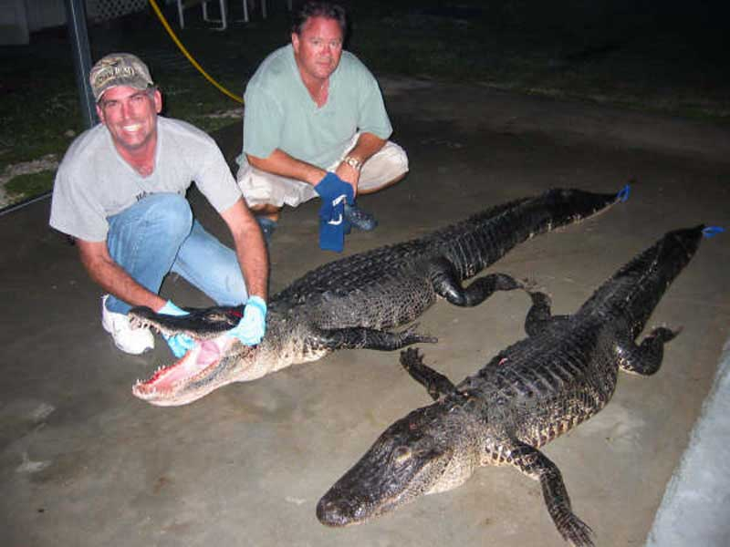 hunting-in-florida-alligator-hunting-005