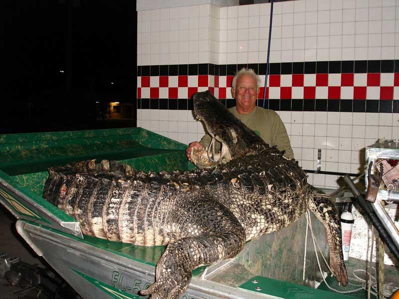 hunting-in-florida-alligator-hunting-007