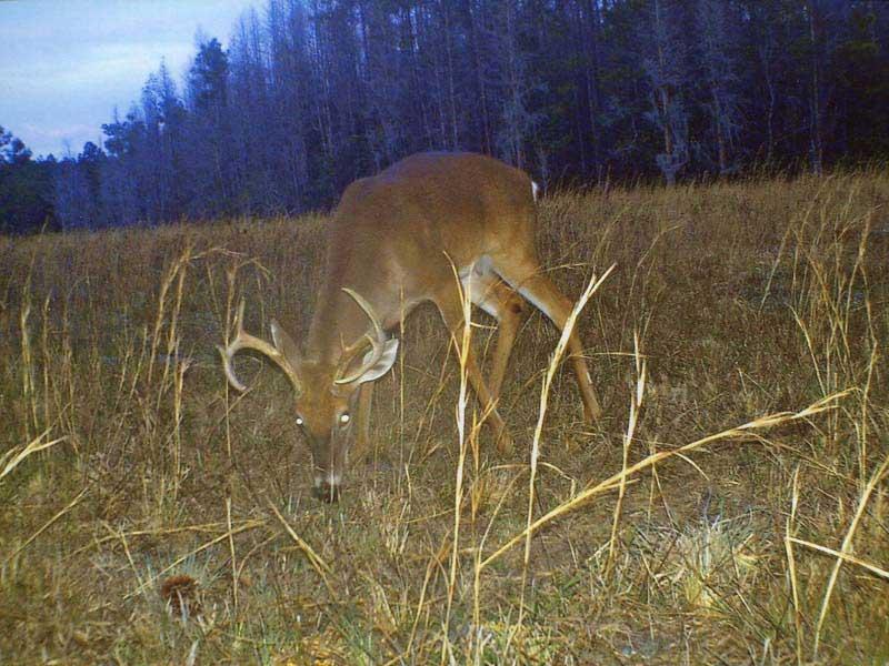 hunting-in-florida-whitetail-deer-hunting-006