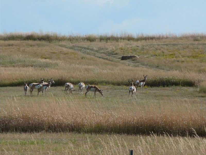 antelope-hunting-wyoming-006