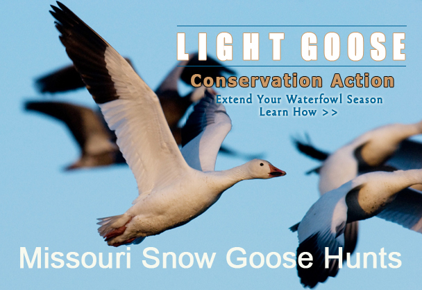 Snow Snow Goose Guides - Fully Guided Spring Snow Goose Hunts --402-304-1192
