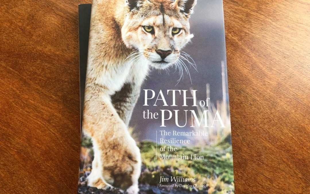 HuntingLife Book Club – Path of the Puma – The Remarkable Resilience of the Mountain Lion