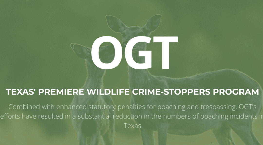 Job Opportunity Operation Game Thief Seeking Executive Director in Texas