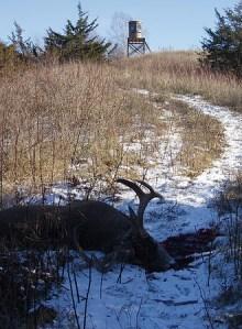 Antlers, Prized Rack, Bow Hunt, Gun Shooters Prize Target, Snowy Deer Hunt, Bare Foot Comfort, Midwest Outdoor Ridge, Muddy Blind Hunt, Rack