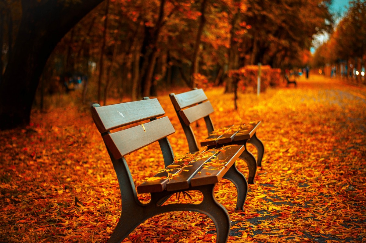 Fall benches