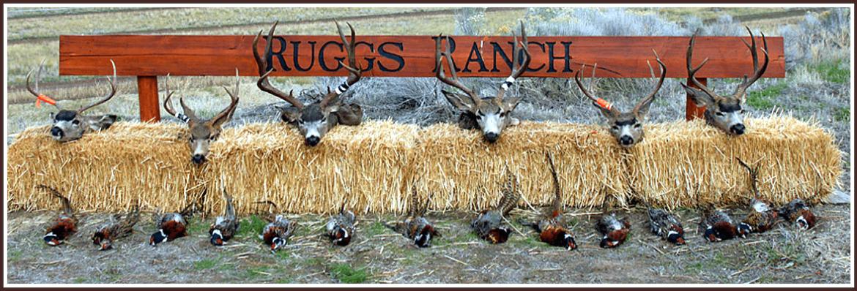 deer image2