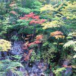 秋の紅葉、岩手県八幡平へ|森の大橋、松川玄武岩などをドライブ