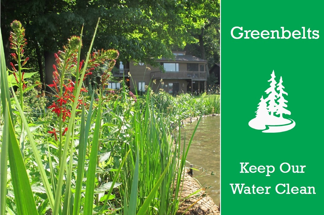 Native plants add beauty and attract pollinators while protecting our waters