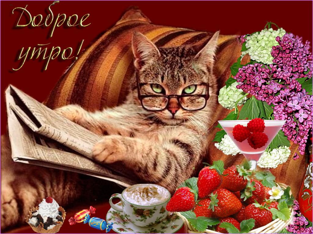 открытки доброго утра и удачного дня