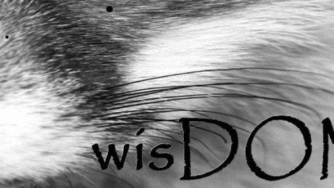 BDSM | Dominance submission | wisDOM