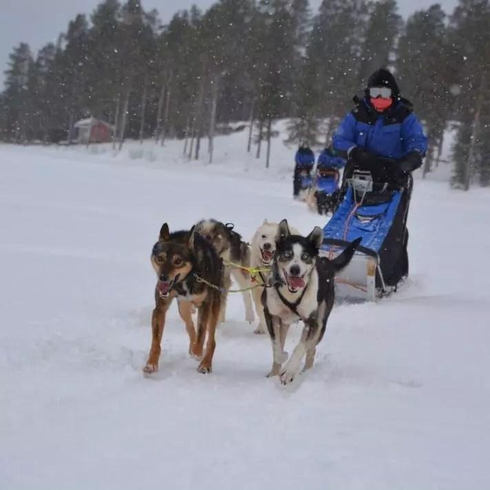 Husky tours drive own team