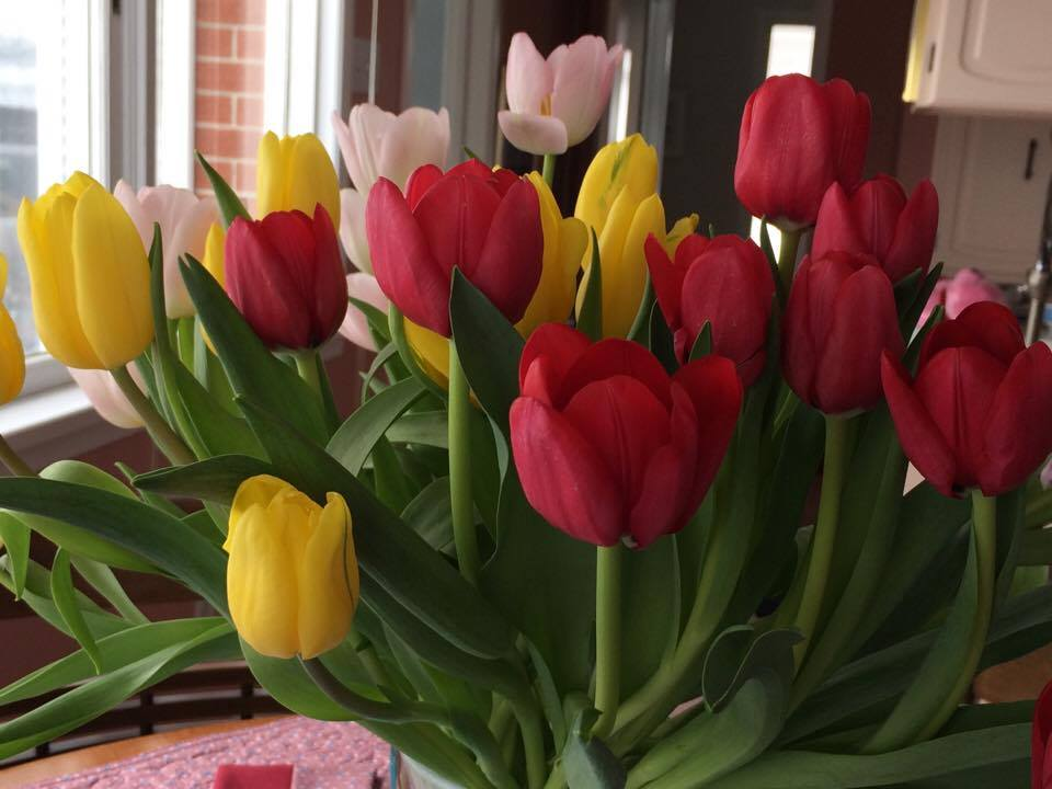 It Takes Courage – and Maybe Some Tulips