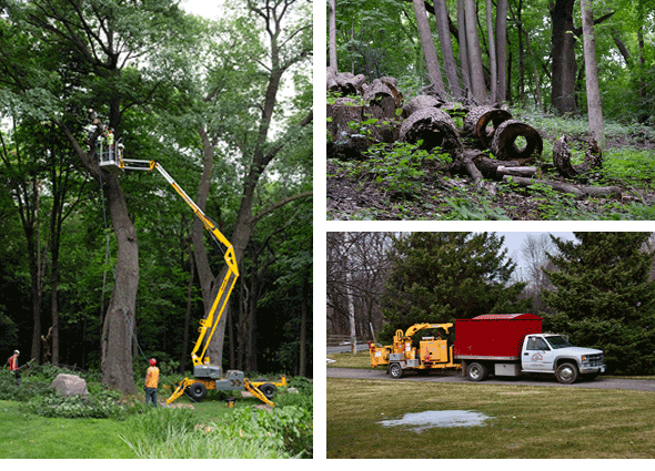 huston-tree-service-tree-collage2.fw