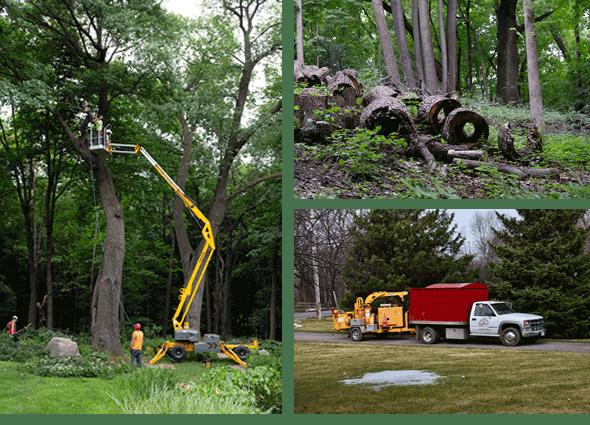huston-tree-service-tree-collage2.fw