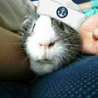 Right Hand Pig - Basil Boy