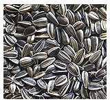 sunflower-seeds-striped