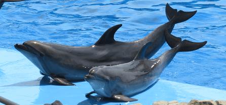 名古屋港水族館で人気のイベントは?おすすめの展示や子供と一緒に行く楽しみ方