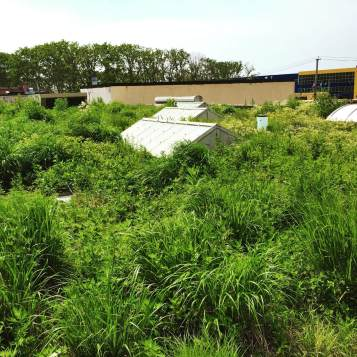 Linda Tool & Die - Brooklyn Green Roof Services - Highview Creations