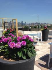 Highview Creations-101 Bedford-Green Roofs NYC 11