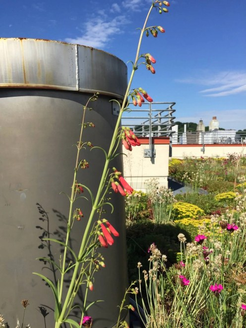 Highview Creations-552 Academy-Green Roof NYC 10