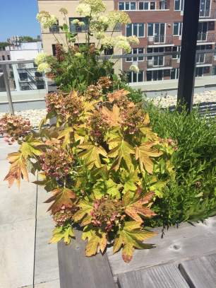 Highview Creations-FH Green Roof-NYC-5