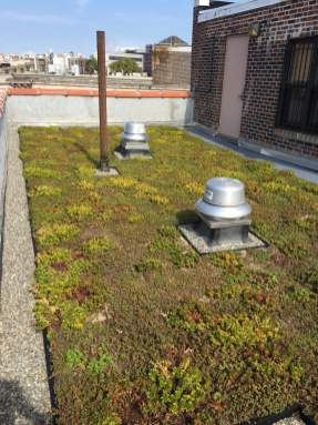 Highview Creations-Green Roof NYC-14