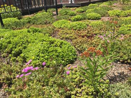 Highview Creations-Lenox Hill Green Roof-NYC-6