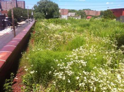 Highview Creations-Linda Tool Green Roof - NYC 2