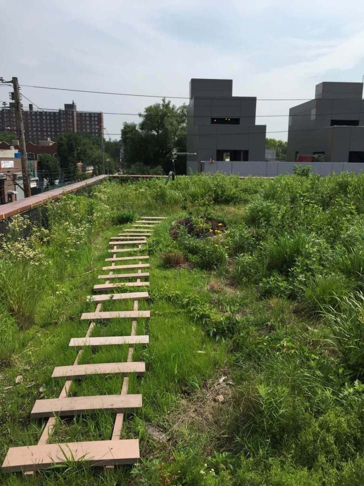Highview Creations-Linda Tool Green Roof - NYC 4