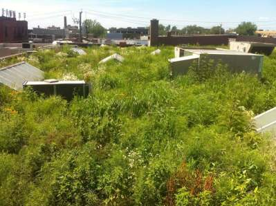 Highview Creations-Linda Tool Green Roof - NYC 8
