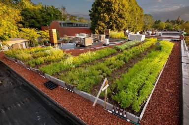 Highview Creations-Rooftop Farm-2