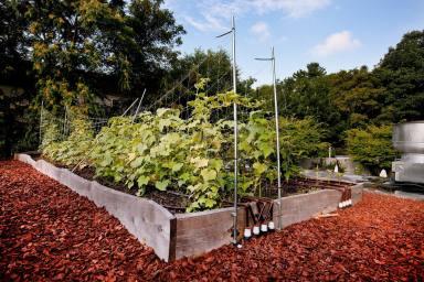 Highview Creations-Rooftop Farm-5