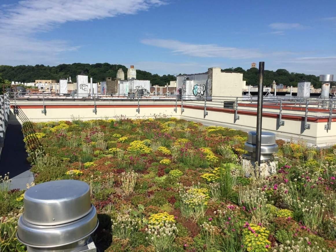 552 Academy - Green Roof Eco Rooftop Garden - Highview Creations