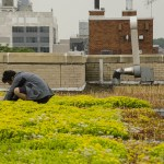 Green Roof Services in Brooklyn - Highview Creations