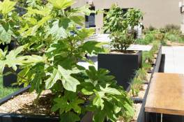 Highview Creations_rooftop garden_nyc5