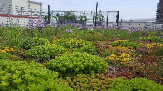 Extensive green roof designed and built by Highview Creations in NYC