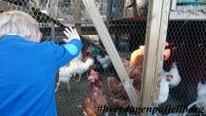 Veslebonden og hønene