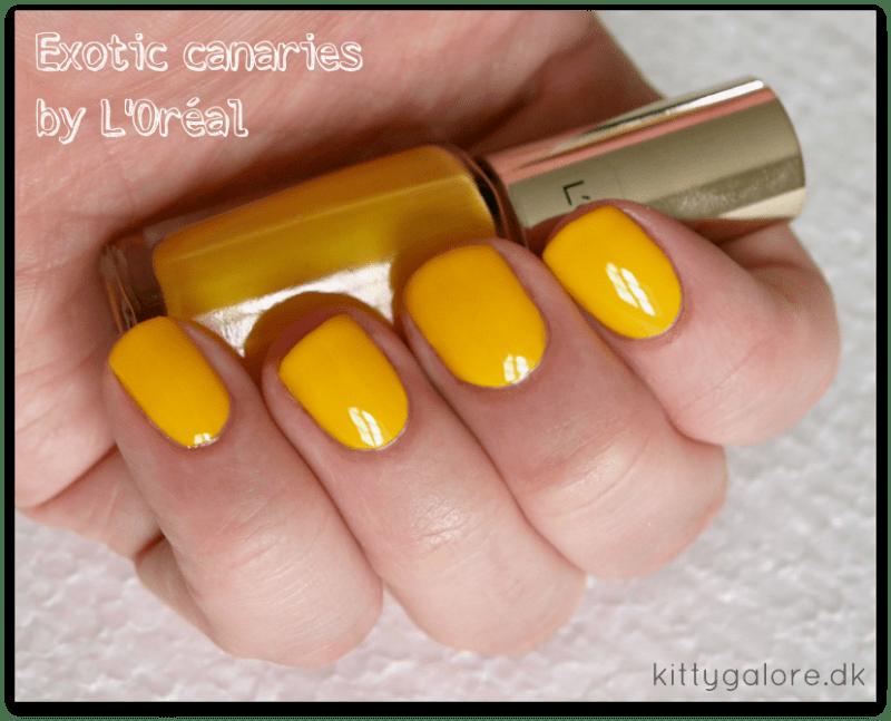 Exotic-canaries-loreal